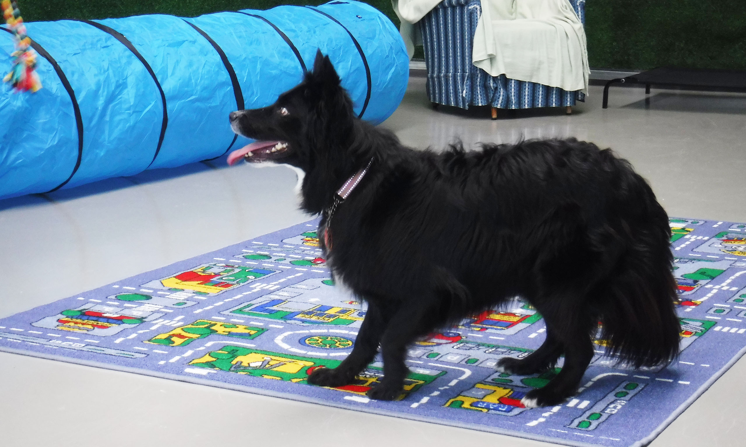 Dogs at play - K9 Day Care Centre